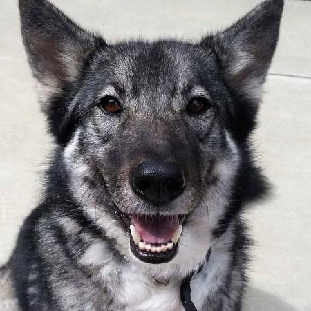 Julia's Pet dog, source Instagram